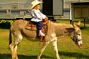 Young cowgirl on a burro