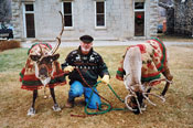 Reindeer and handler